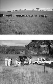 Crace Grassland Reserve
