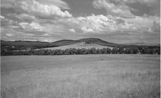 Crace Grassland Reserve, Canberra ACT