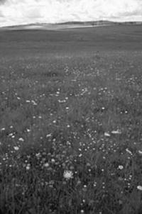 Lowland grassland sites