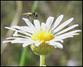 Flora, fauna and landuse change