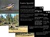 Birds of Grassy Box Woodlands